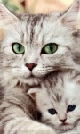 Cat Wallpapers Android Apps screenshot 5/6