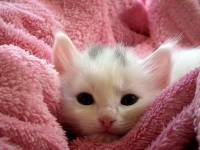 Cute Cat Image Wallpaper screenshot 1/6