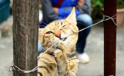 Cute Cat Image Wallpaper screenshot 2/6