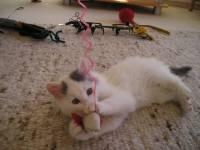 Cute Cat Image Wallpaper screenshot 6/6