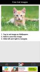 Free Cat Images screenshot 3/6