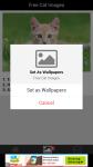 Free Cat Images screenshot 4/6
