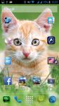 Free Cat Images screenshot 6/6