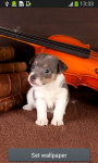 Cute Puppy Live Wallpapers screenshot 1/6