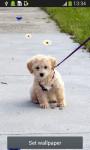 Cute Puppy Live Wallpapers screenshot 4/6
