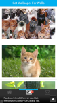 Cat Wallpaper For Walls screenshot 2/6