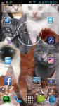 Cat Wallpaper For Walls screenshot 6/6