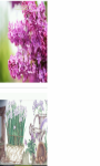 Lilac white flowers pot Wallpaper HD screenshot 2/3
