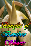 Benefits of Bamboo Shoots screenshot 1/3