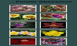 Flowers Photo Gallery screenshot 2/3