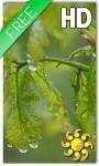 Drops Leaves LWP Free screenshot 1/2