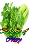 Benefits of Celery screenshot 1/3