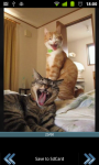 Kastor Funny Pictures screenshot 1/3