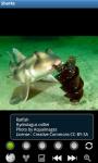 Sharks : Ocean Wild Animals screenshot 2/6