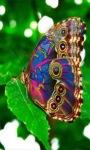 Multicolor Butterfly LWP screenshot 1/3