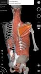 Sistema Muscolare Anatomia 3D original screenshot 3/6
