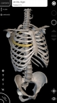 Sistema Muscolare Anatomia 3D original screenshot 6/6