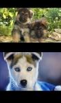Lovely Puppies screenshot 1/4