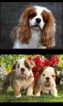 Lovely Puppies screenshot 2/4