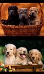 Lovely Puppies screenshot 3/4
