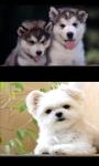 Lovely Puppies screenshot 4/4