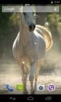 Horses Live Wallpaper 3D parallax screenshot 3/4