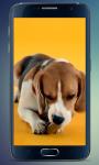 Beagle Puppy Live Wallpaper screenshot 1/3