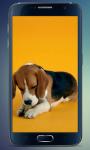 Beagle Puppy Live Wallpaper screenshot 2/3