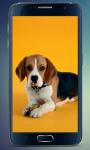 Beagle Puppy Live Wallpaper screenshot 3/3
