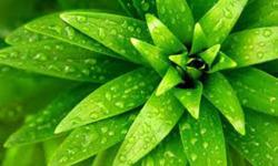 Green hill wallpaper screenshot 4/4