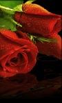 Red Roses Lwp screenshot 1/3