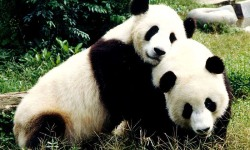 Baby Panda Jumping screenshot 4/5