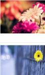 Flowers Gerbera Macro Wallpaper HD screenshot 2/3