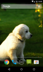 Dog Live Wallpaper HD screenshot 3/5