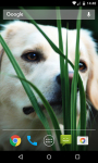 Dog Live Wallpaper HD screenshot 5/5
