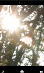Sun Through Trees Live Wallpaper screenshot 1/1