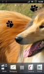 Beautiful Collie Lassie Dog Live Wallpaper screenshot 2/3