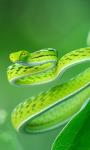 Exotic Snake Live Wallpaper screenshot 2/4