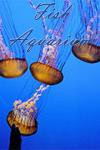 Fish Aquarium Tips screenshot 1/2