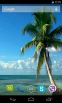 Palm Tree Video Live Wallpaper screenshot 4/4