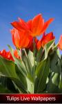Tulips Live Wallpapers Best screenshot 1/6