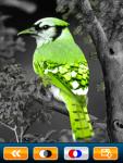 Color Effect screenshot 2/5