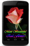 Most Beautiful Red Flowers screenshot 1/3