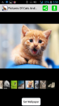 Pictures Of Cats screenshot 1/4