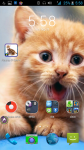 Pictures Of Cats screenshot 4/4