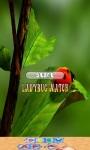 Ladybug Game for Children screenshot 1/4
