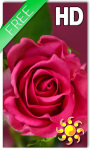 Rose Love Live Wallpaper screenshot 1/2