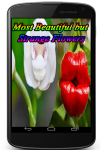 Most Beautiful but Strange Flowers screenshot 1/4