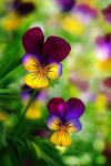 Most Beautiful but Strange Flowers screenshot 2/4
