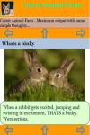 Cutest Animal Facts screenshot 3/3